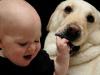 Почему собаке нельзя облизывать ребенка