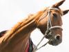 Южноуральцы собирают средства на лошадь-терапевта
