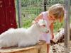 Принятый Госдумой закон запрещает контактные зоопарки