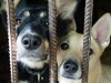 Дети из 15 школ Челябинска организуют выставку-ярмарку, чтобы помочь животным в приютах