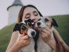 День собаковода