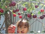Все лето ели ягоды!!! - Дубынина Карина, 8 лет