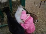 Ой, вы мои козлятушки - ребятушки!!! (фото от Усмановой Диляры)